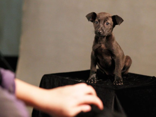 Taiwan-Doomed-Dogs-003_540x405