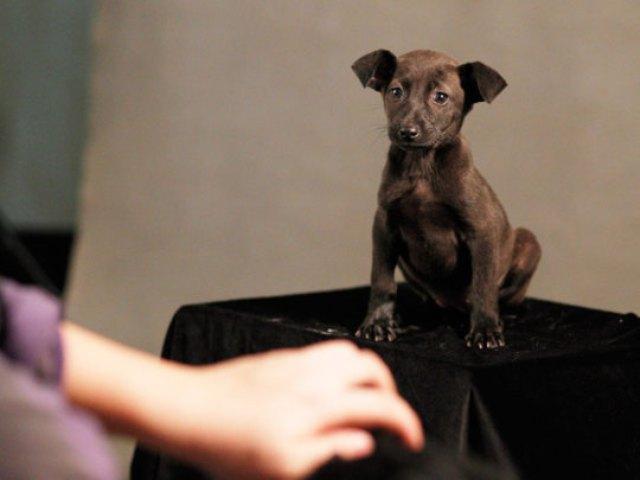 Taiwan-Doomed-Dogs-003_540x405